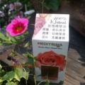 Meditrina Rose Oil 玫瑰精華油